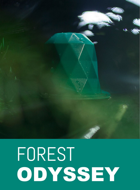 Capsule Forest Odyssey